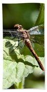 Sunny Dragonfly Beach Towel