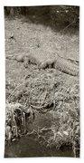 Sunny Gator Sepia  Beach Towel