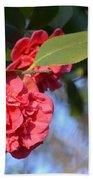 Sunny Red Camelias Beach Towel