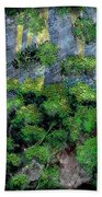 Suns Rays - Forest - Steel Engraving Beach Towel
