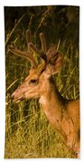 Sunset Buck Beach Towel