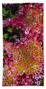 Sundew Beach Towel