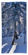 Sunshine Through Winter Trees Beach Towel