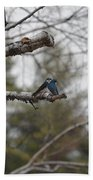 Swallow Discussion Beach Towel
