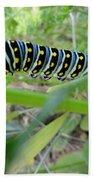 Swallowtail Caterpillar Beach Towel
