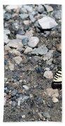 Swallowtail Beach Towel