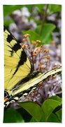 Swallowtail On Lilacs Beach Towel