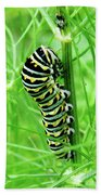 Swallowtail To Be Beach Towel
