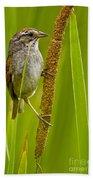 Swamp Sparrow Pictures Beach Towel