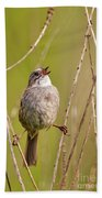Swamp Sparrow Split Decision Beach Towel