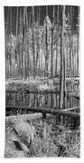 Swamp Trees Beach Towel
