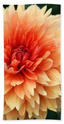 Sweet Dahlia Beach Towel