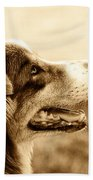Sweet Doggie Beach Towel