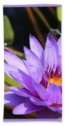 Sweet Dragonfly On Purple Water Lily Beach Sheet