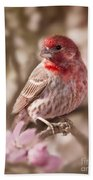 Sweet Songbird Beach Towel