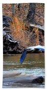 Sweetwater Heron In Flight Beach Towel