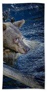 Black Bear On Blue Beach Towel