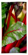 Swiss Chard Forest Beach Towel