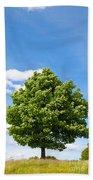 Sycamore  Acer Pseudoplatanus Beach Towel