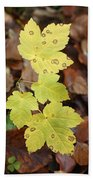 Sycamore Leaves Germany Beach Towel