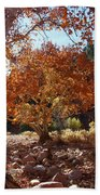 Sycamore Trees Fall Colors Beach Towel
