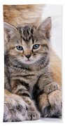 Tabby Kitten Between Large Dogs Paws Beach Towel