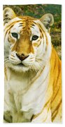 Tabby Tiger I Beach Towel
