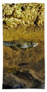 Tadpole Tail Beach Towel