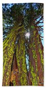 Tahoe Trees - Lake Tahoe By Diana Sainz Beach Towel