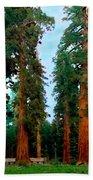 Tall Trees In Yosemite National Park Beach Towel