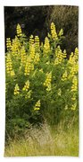 Tall Yellow Lupin Beach Towel
