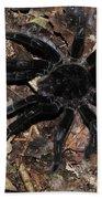 Tarantula Amazon Brazil Beach Towel
