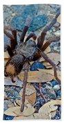 Tarantula Spider In Park Sierra Near Coarsegold-california Beach Towel