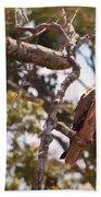 Tawny Eagle Beach Towel by Perla Copernik