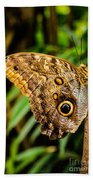 Tawny Owl Butterfly Beach Towel