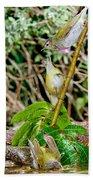 Tennessee Warblers Beach Towel