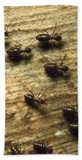 Termites On Wood With One Carrying Beach Towel by Konrad Wothe