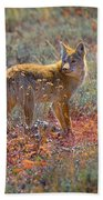 Teton Coyote Beach Towel