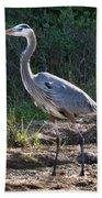 Texas Coastal Birds Beach Towel