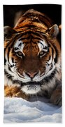 The Amur Tiger Beach Towel