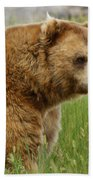 The Bear Dry Brushed Beach Towel