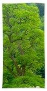 The Beauty Of A Tree Beach Towel