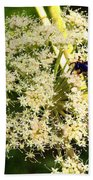 The Bee And The Flowers At Troldhaugen Beach Towel