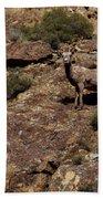 The Bighorn Uwe Beach Sheet