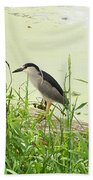 The Black-crowned Night Heron Beach Towel