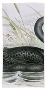 The Black Swan Beach Towel by John Gould