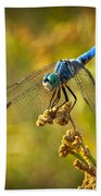 The Blue Dragonfly  Beach Towel