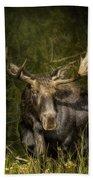 The Bull Moose Beach Towel