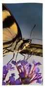 The Butterfly Beach Sheet