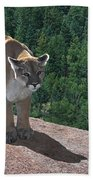 The Cougar 1 Beach Towel